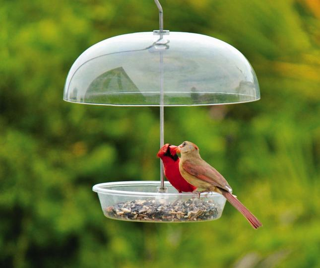 Cardinals At The Dinner Bell Feeder